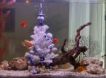 Новорічний акваріум