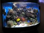 Морські акваріуми / Морские аквариумы